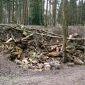 Fallen Logs Site