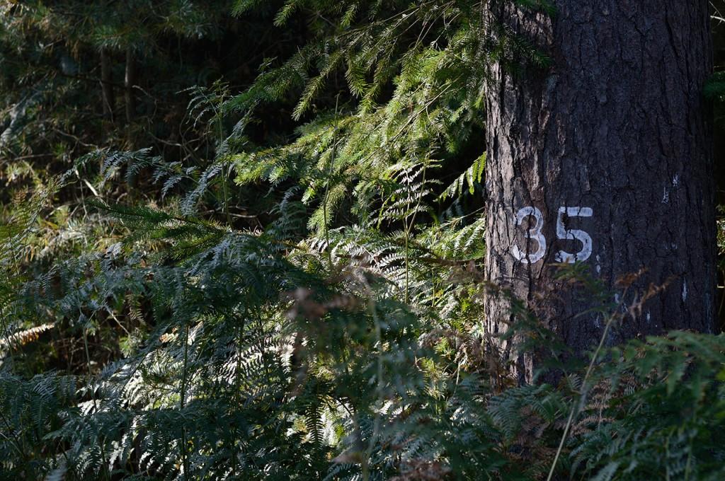 Compartment marker in Thetford Forest. Photograph: Ji Sun Sjogren