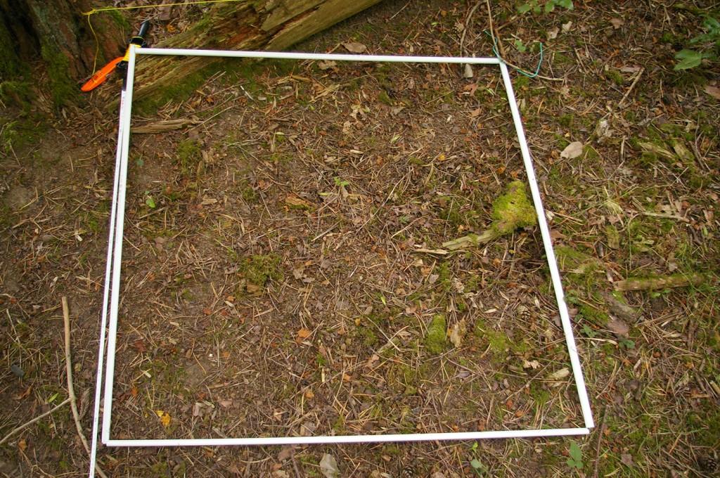 1m square quadrat