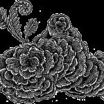 Turkey Tail Fungus (Trametes versicolor)