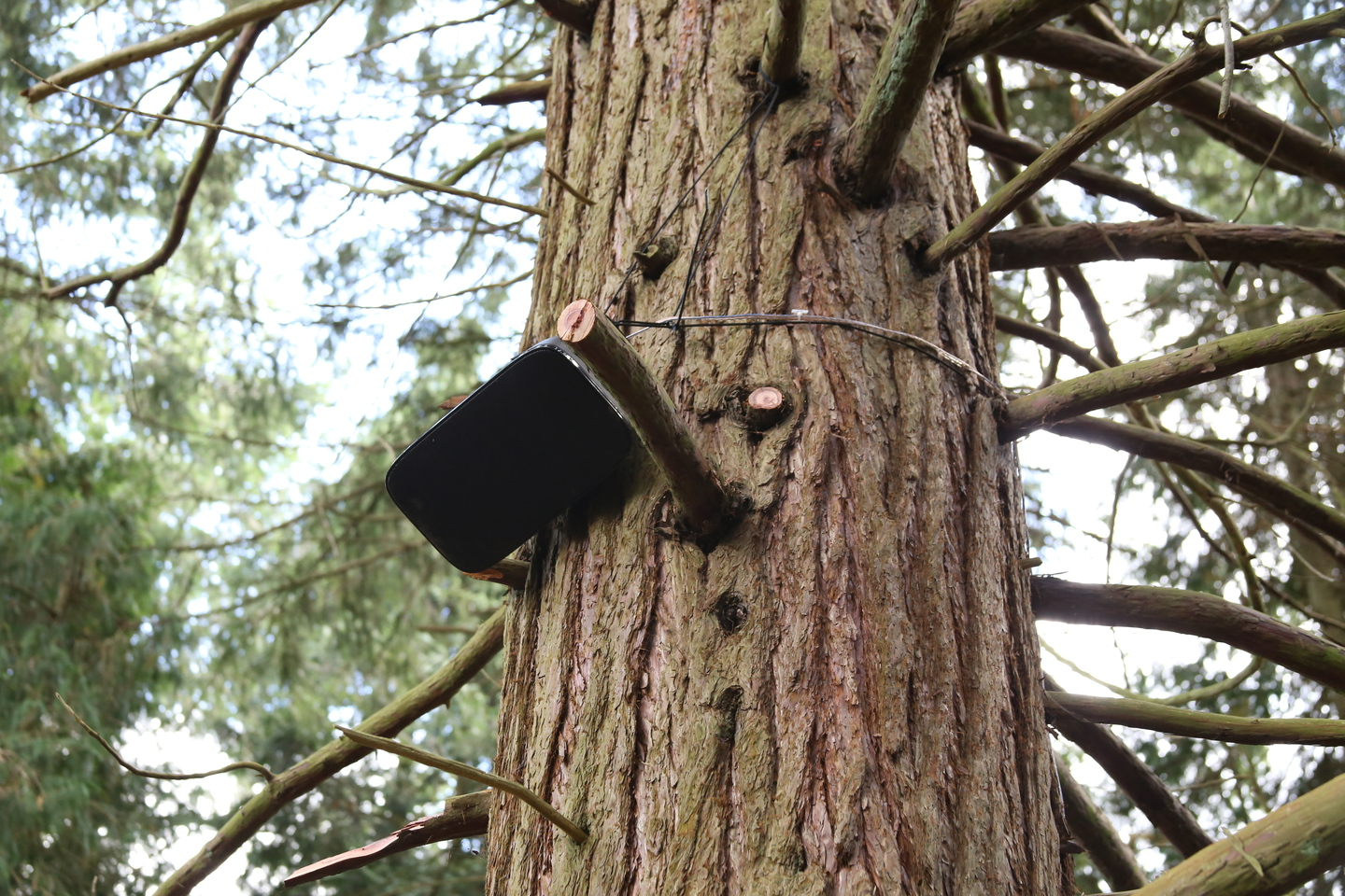 Bowers and Wilkins AM-1 in giant sequoia
