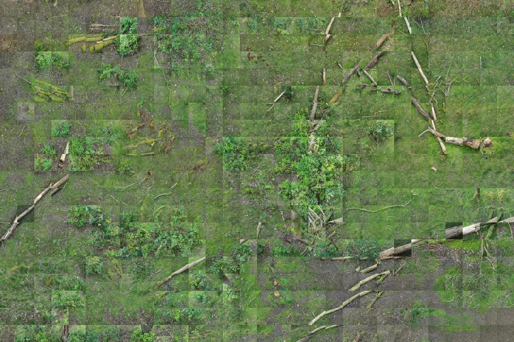 I. Thetford Forest